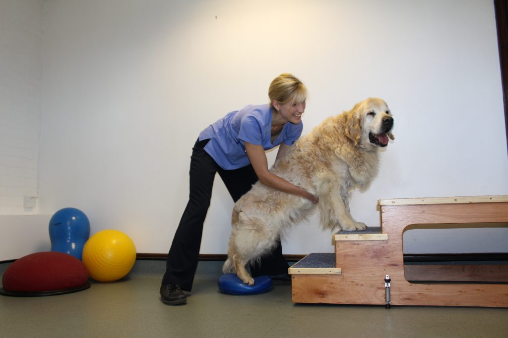 Veterinary Physiotherapy